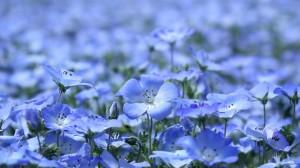 len-flowers_1600x900